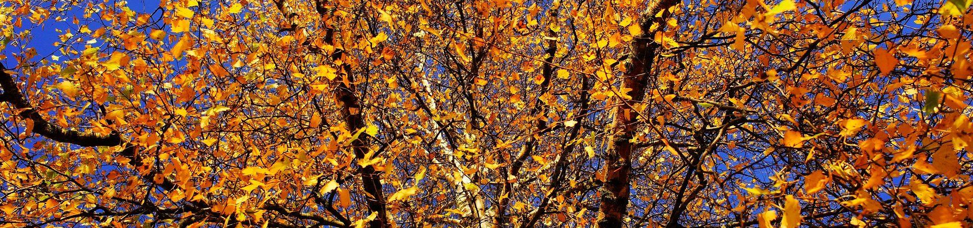 Hösten är snart här